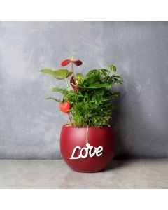 Potted Anthurium & Boston Fern, floral gift baskets, gift baskets, potted plant gift baskets