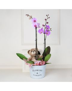 Potted Orchids and Bear, gourmet gift baskets, floral gift baskets, Valentine's Day gifts, gift baskets, romance